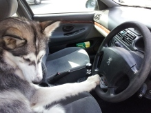 when I'm driving in my car...