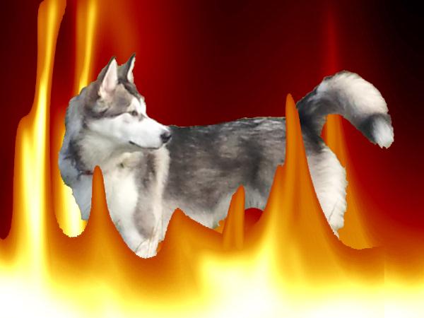 dog on fire the misadventures of misaki