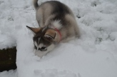 at 9 weeks in the snow