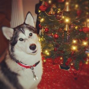 Misaki's christmas tree