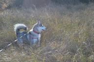 fun in the long grass