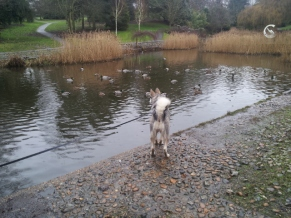 checking out the duck pond