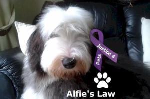 Alfie's law