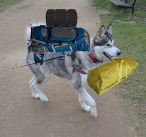 off to sammy's camping trip