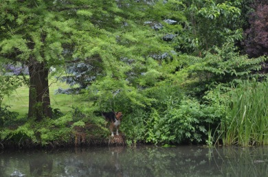 this guy kept barking at us, bet it would've been a different story if we were on the same side of the river!
