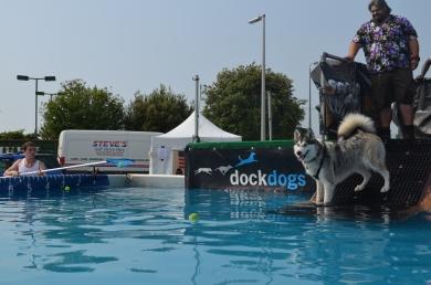 Failed dock dog