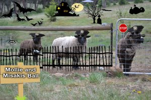 guard sheep