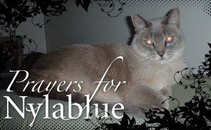 prayers for nylablue