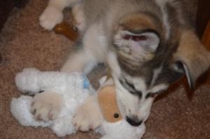 Baby Misaki and Lambchop