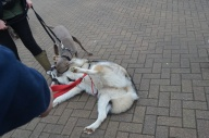 cuddles with Ezio