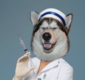 Nurse Misaki