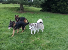 Romping about with Freddie and Buddy