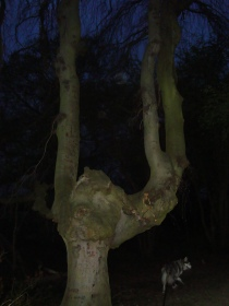 scary devil's fork tree