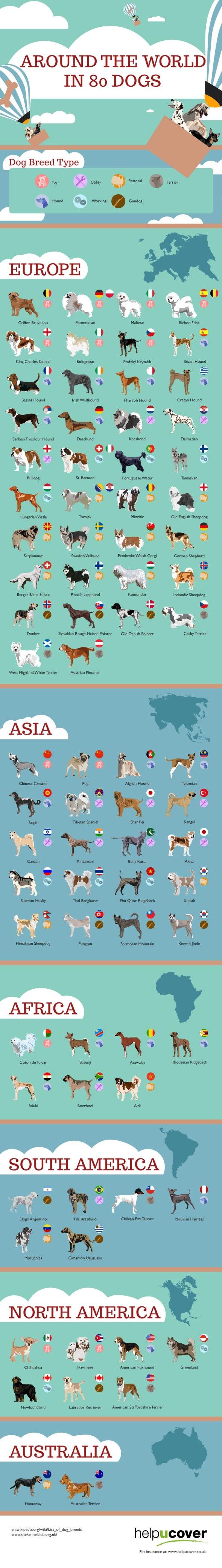 80_dogs_around_the_world_full