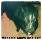 Bacon's show and tell