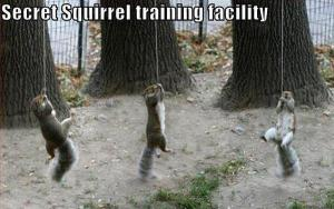 a.baa-Secret-Squirrels-