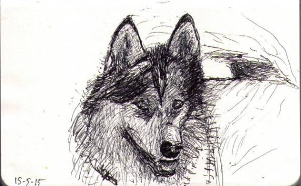 thomas-dalsgaard-clausen-2015-05-15a-drawing-of-a-dog-called-misaki-in-ballpoint-pen